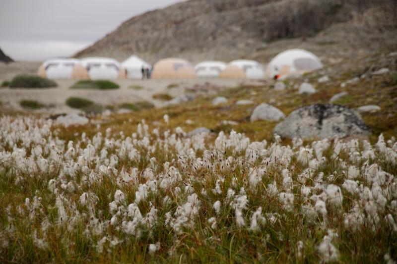 Campamento algodones GrandePequeña