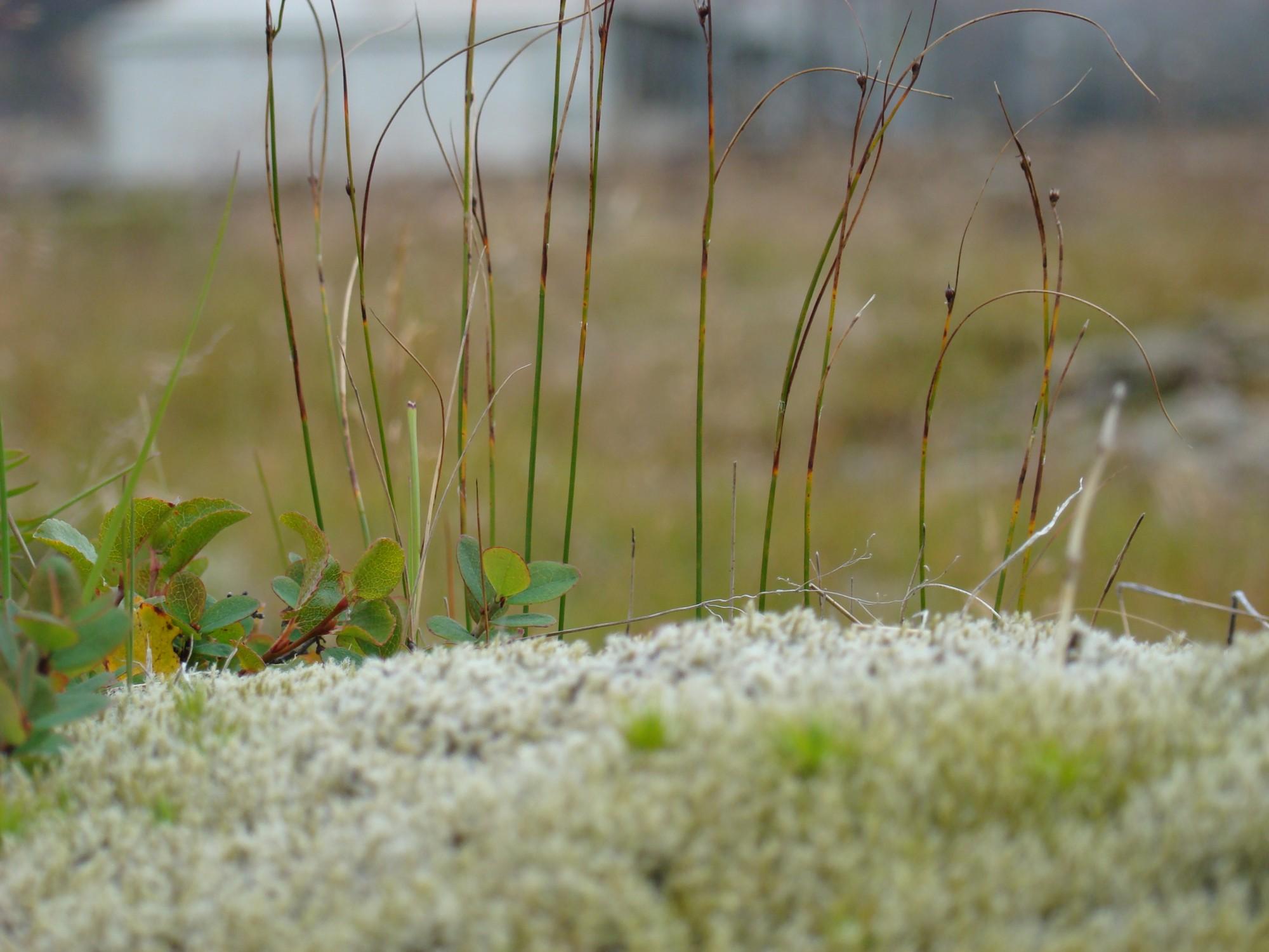 vegetación 1