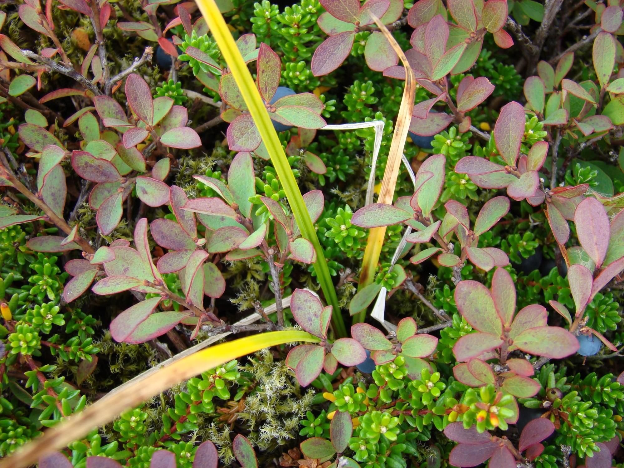 vegetacion 2